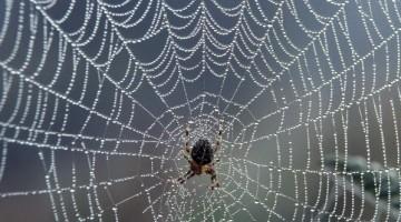 spiderandweb
