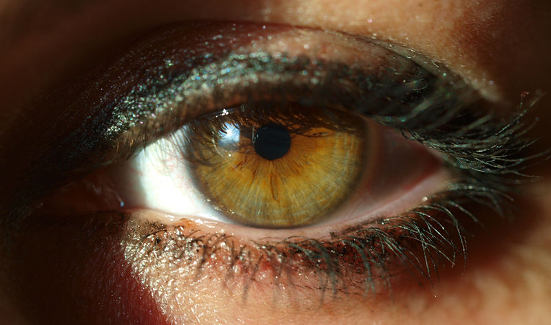 800px-A_woman's_eye