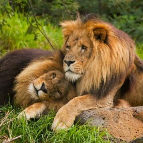 Homosexuality Among Animals: Can Animals Be Gay?