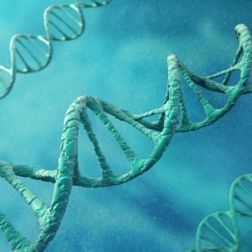 Scientists discover genes linked to homosexuality