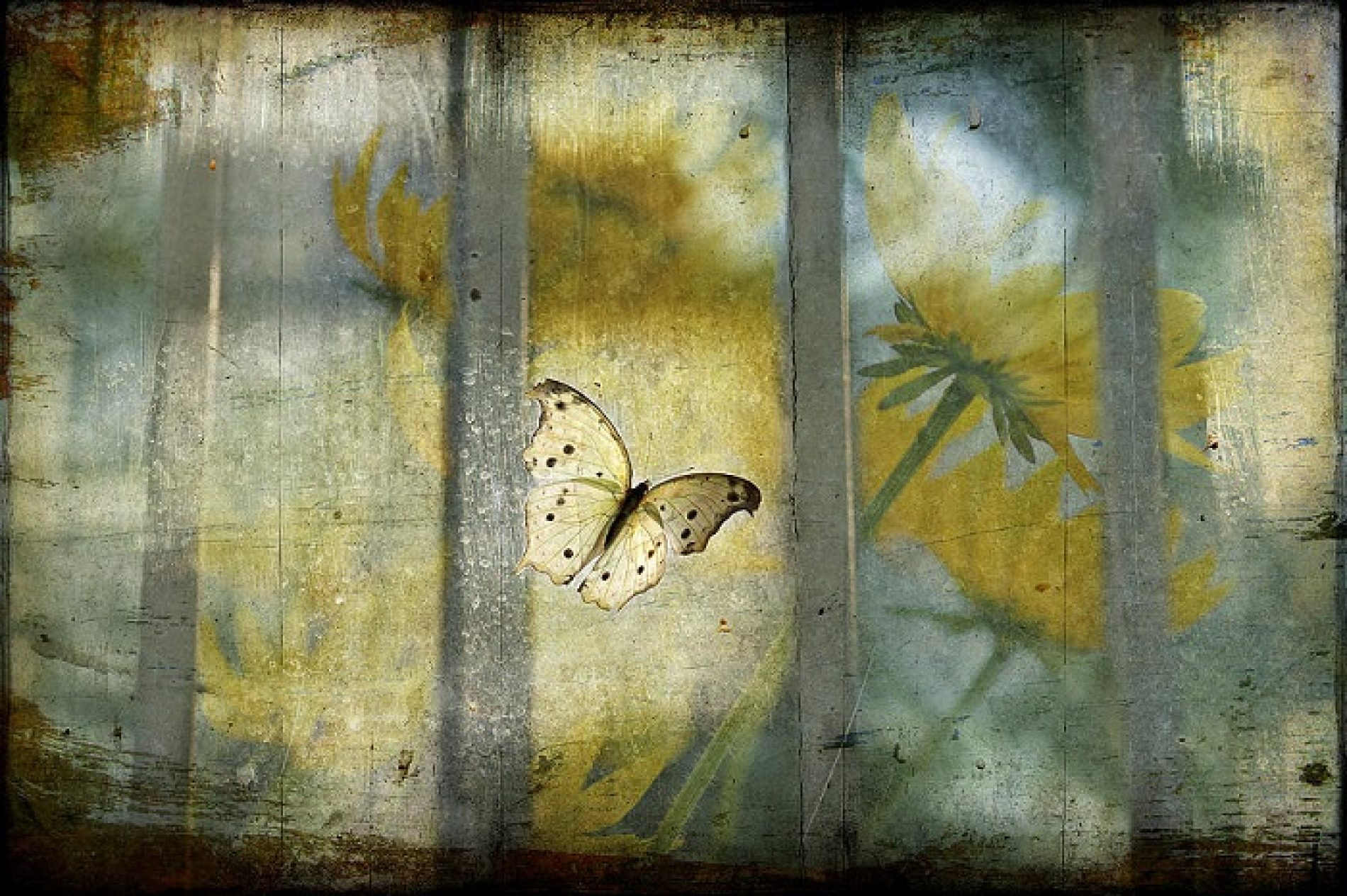 The Trapped Butterfly